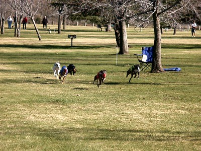 Dog races, Feb 2002