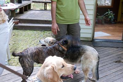Dog-E-Central Party