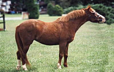 Princess, Christinas pony from years ago. She recently passed away.