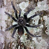 Welcome Home to Texas!<br /> <br /> After the reunion, I visited my sister's family's ranch outside of Brenham.  While exploring outside with the kids, I felt something on my shoulder, reached up to determine what it was, and felt this tarantula perched up on my shoulder.  As a Biology major undergraduate I normally do not get squeamish with critters, but this one made me jump and holler!.   My niece Elizabeth rescued me by using a long tool to move the spider off of my shoulder.