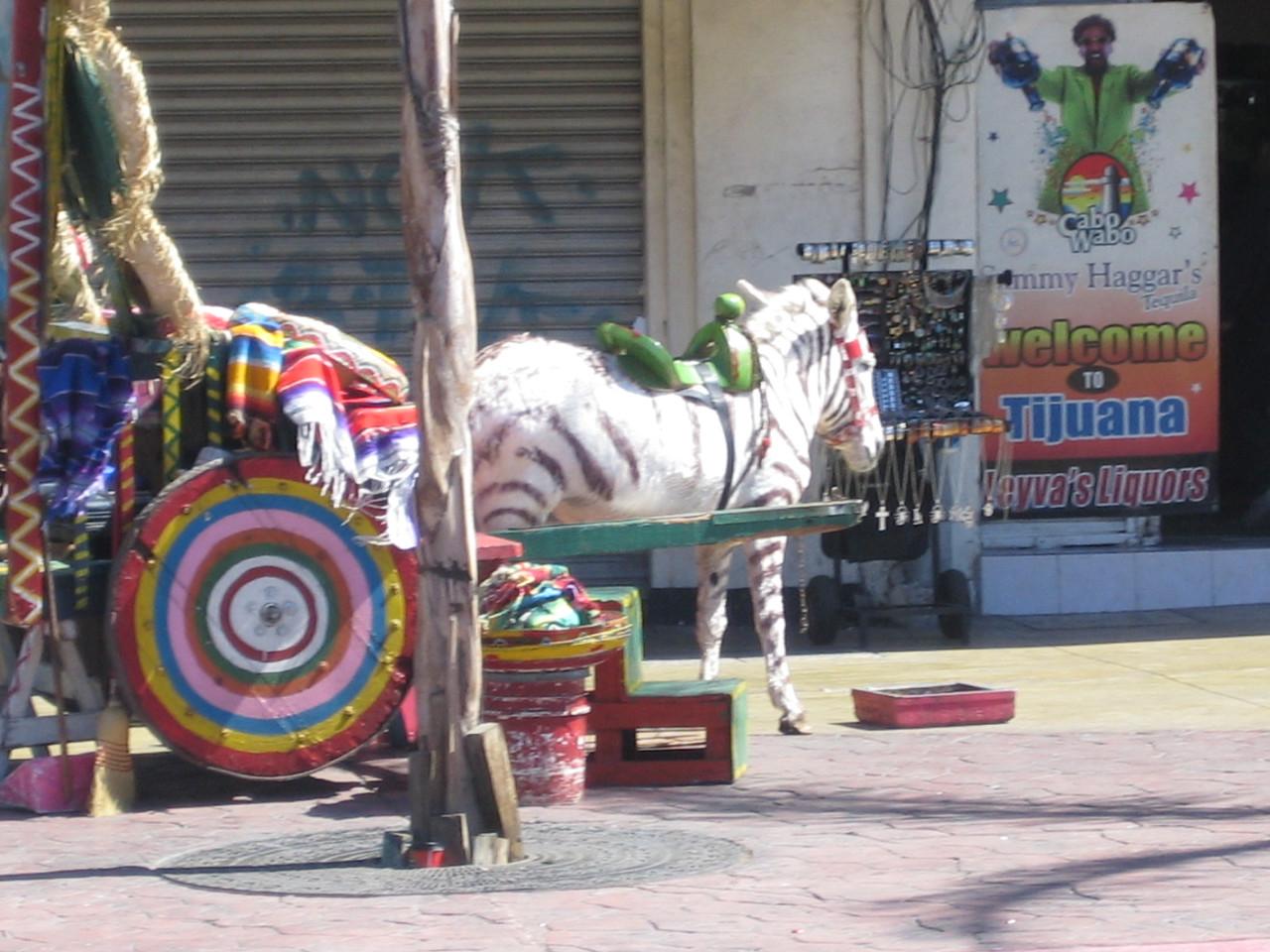 San Diego, Tijuana 071