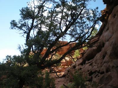 Canyon chiaroscuro.
