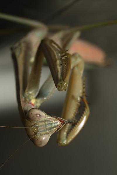 JPG-DLS-IMG_5591-Mantis