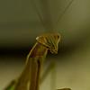 JPG-DLS-IMG_5555-Mantis