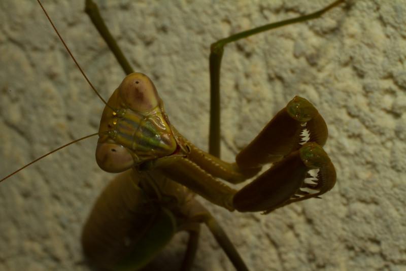 JPG-DLS-IMG_5614-Mantis