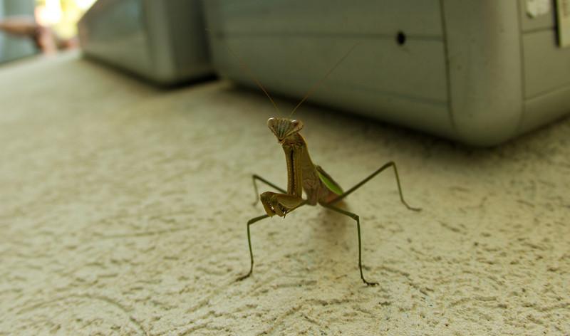 JPG-DLS-IMG_5544-Mantis