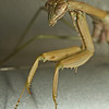 JPG-DLS-IMG_5578-Mantis