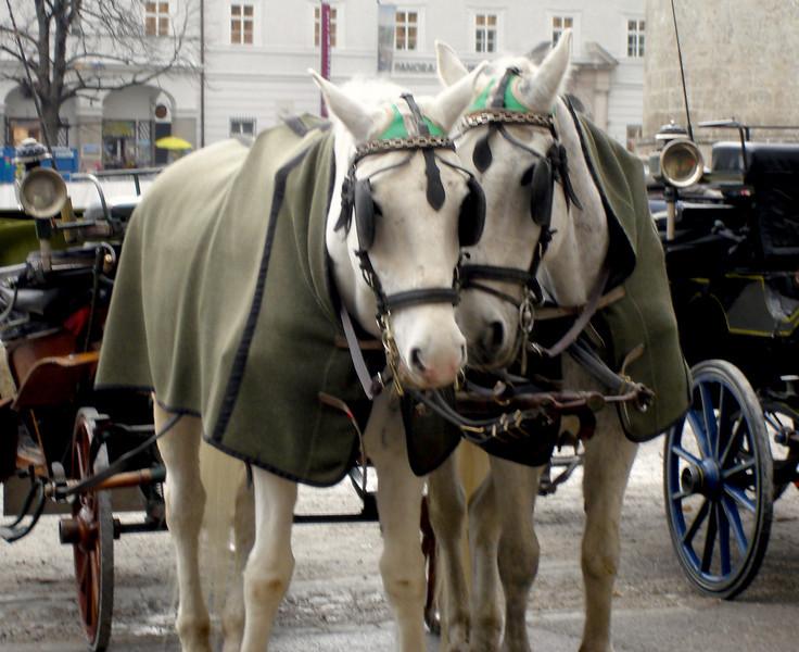 Horses Saltzberg