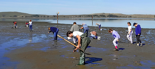 "Clam digging at Bodega Bay 4-2007 ( I think?)3 image photomerge. To purchase this or any other panoramic image, select ""none"" as your crop option at checkout. Prints will have to be trimmed when recieved."