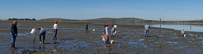 "Clam digging at Bodega Bay 4-2007 ( I think?)4 image photomerge. To purchase this or any other panoramic image, select ""none"" as your crop option at checkout. Prints will have to be trimmed when recieved."