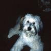 Our dog, Buddie (Short for Budweiser)