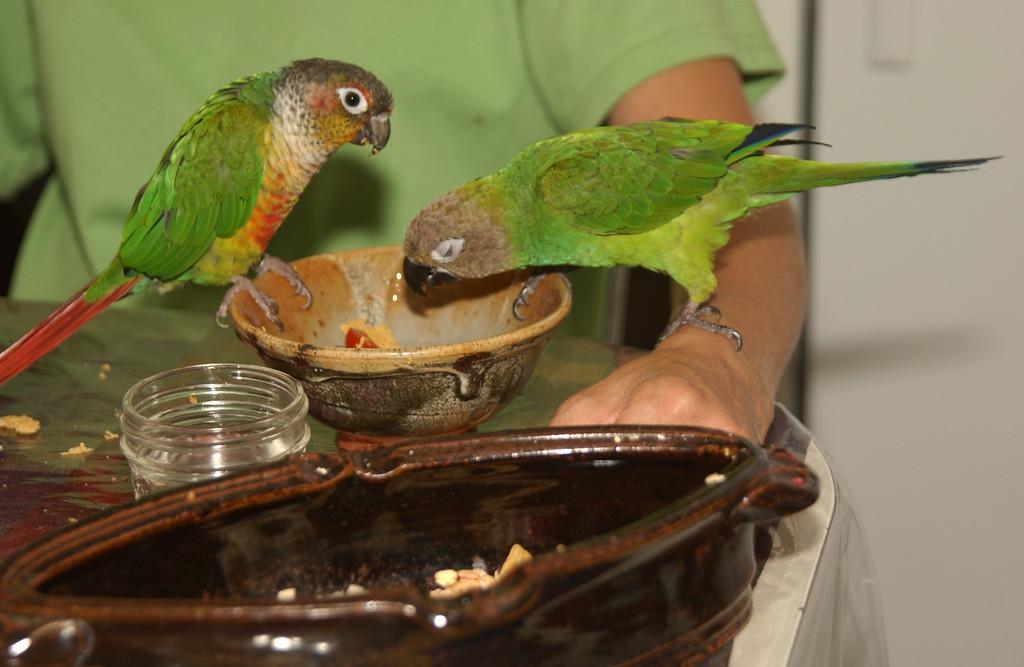 Juanita & Niko's conyers