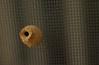 "Tiny (3/4"") ""pot"" made by wasp on Juanita & Niko's screen door!"