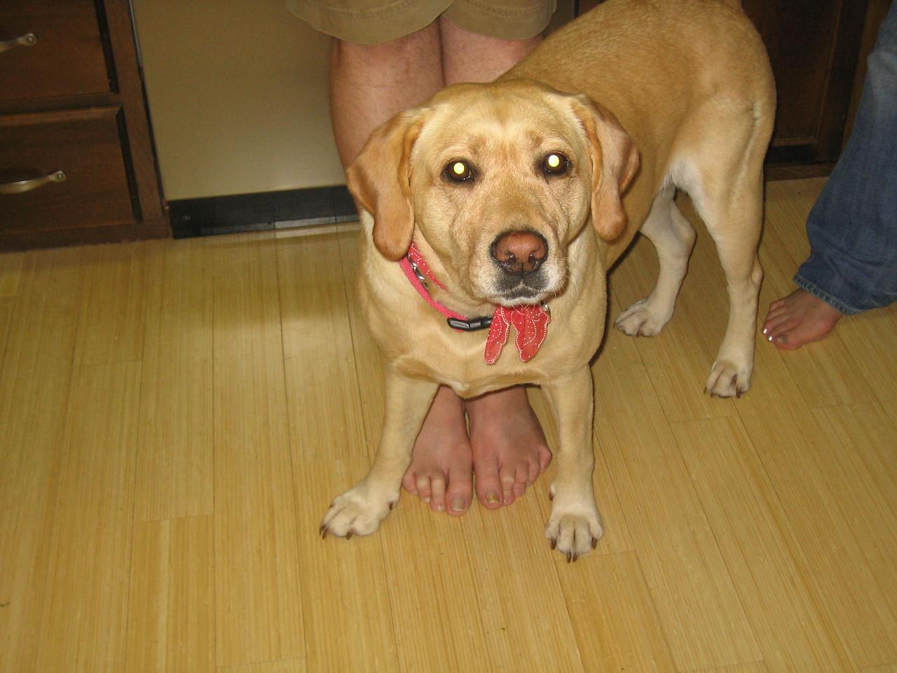 Sophie has six legs.