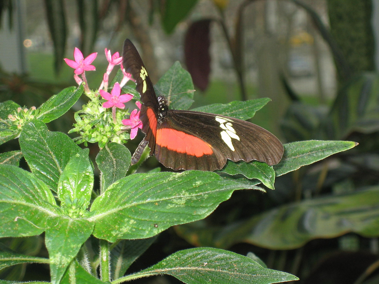 Butterfly room at the Museum of Science