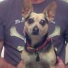 "This is Kip's ""macho"" pirate shirt, behind Poppy's pretty, alert face."