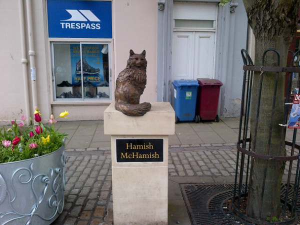 This is a cat that has roamed freely around St Andrews, in and out of shops and the Universities, for years. he's so well known a bronze statue was made of him. Last week there was a telly programme about him and his owner .Sadly yesterday we heard he had died, but gosh what a wonderful life he had.