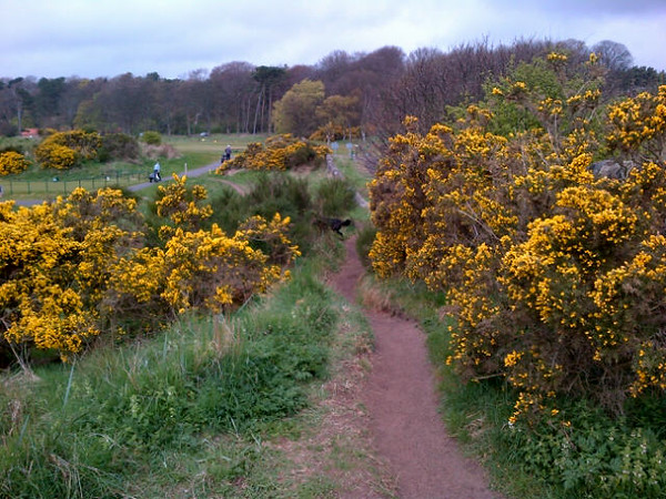 Gorse with Orla.