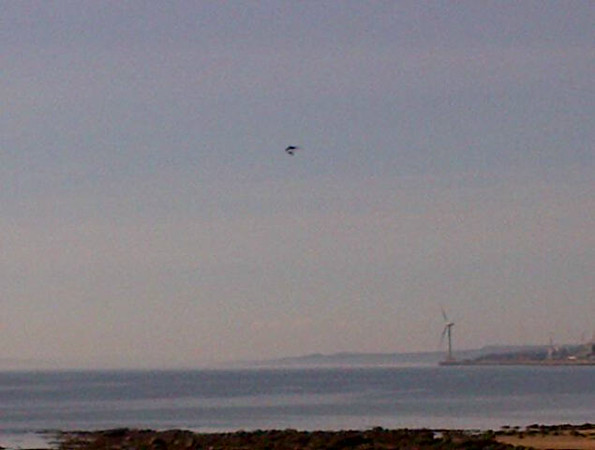 a motorised hang glider, looked good to photo, but just a dot in the sky.