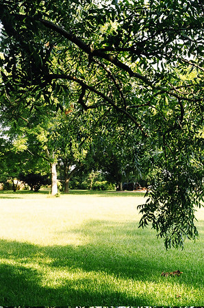 Under a Pecan Tree, Koinonia Farms