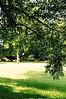 Under a Pecan Tree, Koinonia Farms