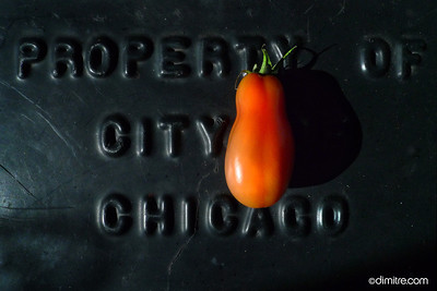 006_Property_of_Chicago_590