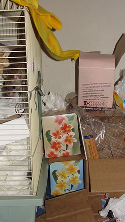 Great enrichment: Leave a kleenex box within reach outside the cage bars. Next morning you will find one million kleenex pulled inside and stuffed (see white pile inside this cage). :)