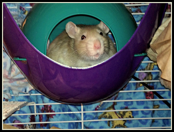 Baby Maizie is happy in her little space pod.