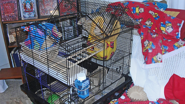 Second cage, provided about a week into their arrival.