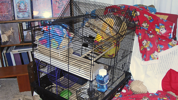 First large cage provided. They're still in semi-quarantine in a different room in my apartment.