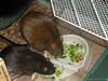 Bonny and Chancy much broccoli for dinner.