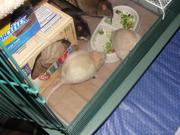 Bottom clockwise: Melody, Chancy, Bonny, Lila, munch dinner.