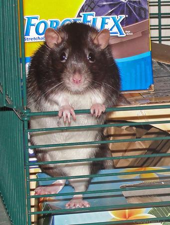 "Child Rat, Chancy (""Chance-ee"")."