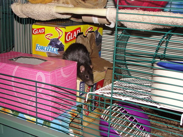 Chancy in the glory of part of one cage.