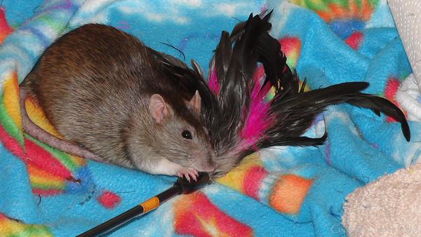 Bonny Bon-Bon and her feathers.