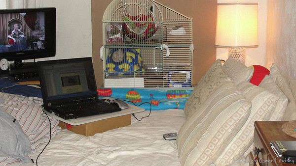 My rats have a preference for Bewitched. :)