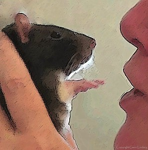 JoinRats - GAINING THE TRUST OF PET RATS