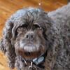 Sadie, just a bit fuzzy