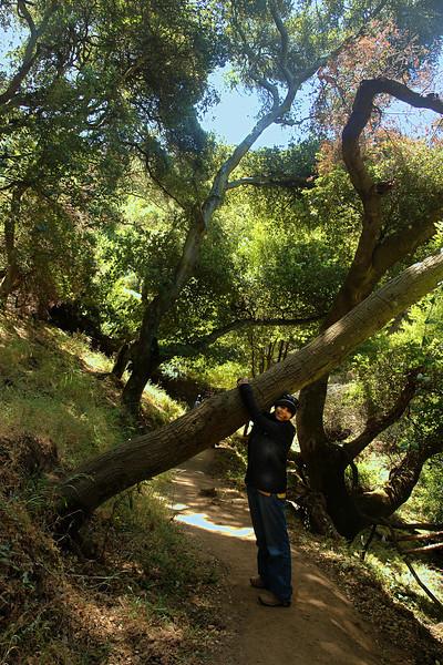 Karishma uproots a tree.