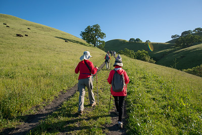Hiking in Mt. Diablo, Mercado Ranch