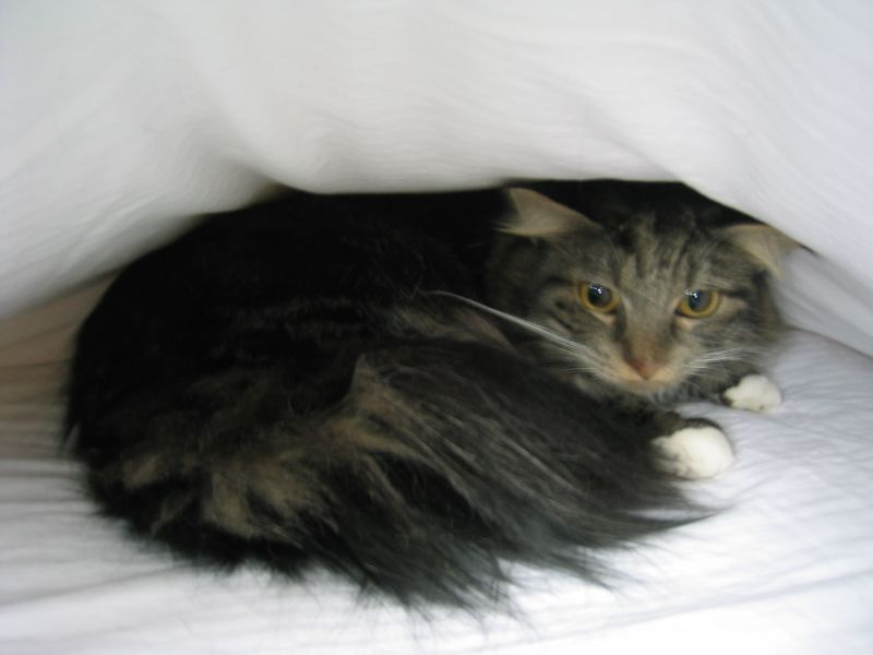 2004 01 02 Friday - Hobbit under the covers - no flash