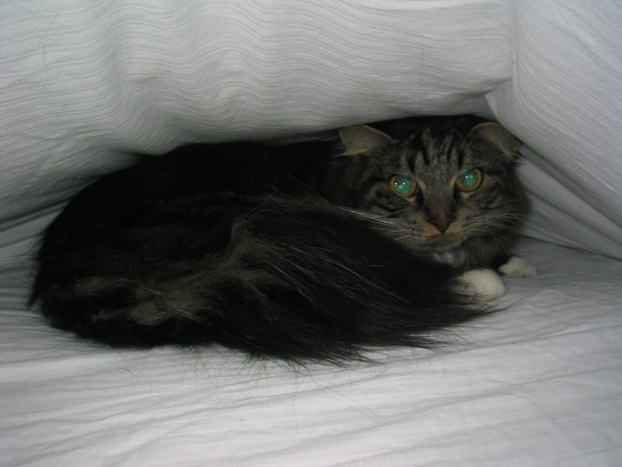 2004 01 02 Friday - Hobbit under the covers - with flash