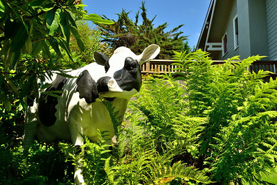 Laura's very tasteful yard cow.