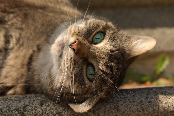 """Sally was a cat-lover, plain and simple. She had many cat stories over the years. Her own cat that I remember the most about was """"Lewis"""".  (Shy Girl, our tabby cat, scratching her head on the steps)"""
