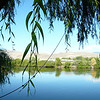 World's finest rope swing - cantilevered off a willow tree into the Okanogan River
