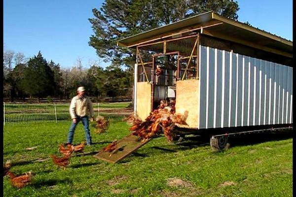 John Chandler's Pasture-Raised Egg Farm Videos