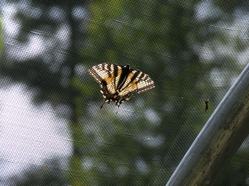 Adirondack Visitors Interpretive Center - Butterfly House