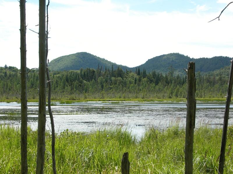 Adirondack Visitors Interpretive Center  - Boreal Forest Walk