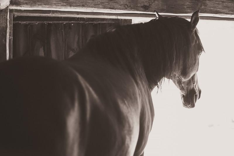 Chapman Farm_Maine_2014-5997