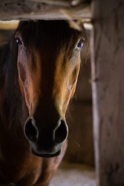 Chapman Farm_Maine_2014-5925